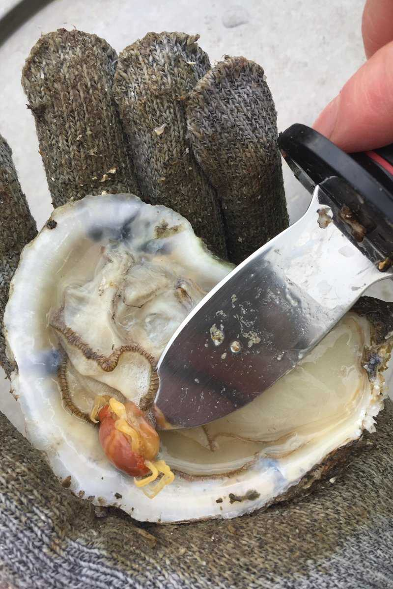Baby crab inside blue point oyster